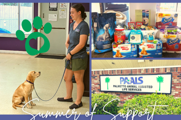 Summer of Support: Service Dogs